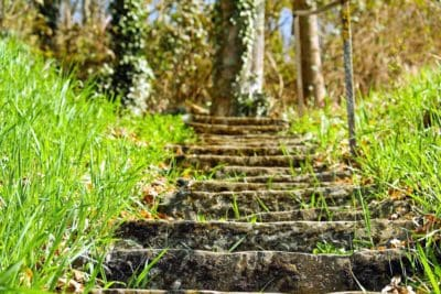 grass, leaf, wood, flora, nature, tree, road, stairs, forest, landscape
