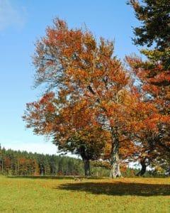 legno, paesaggio, foglia, albero, rurale, natura, paesaggio, autunno
