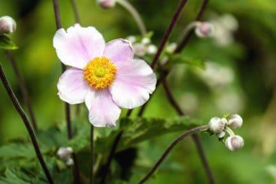 hoja, flor, jardín, flora, naturaleza, Pétalo, verano, planta
