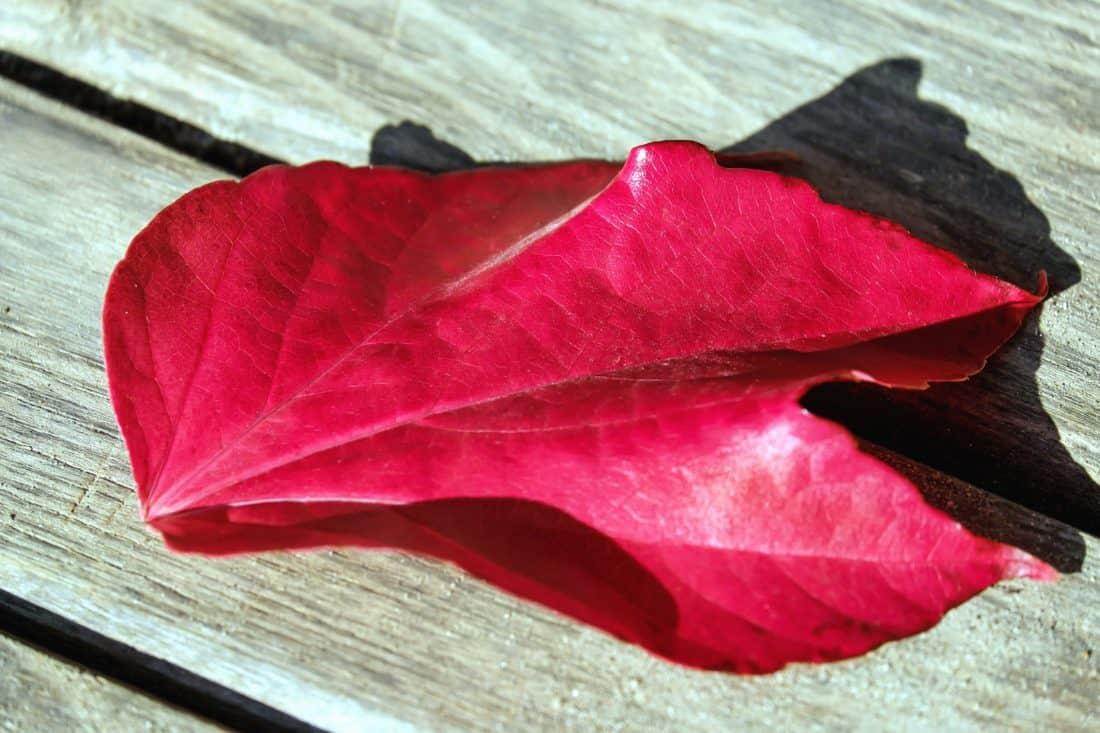 naturaleza, hojas, tela, madera, Banco, sombra