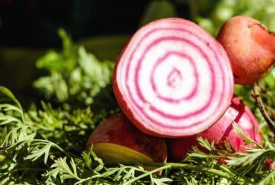 rábano, verduras, hojas, raíz, orgánico, alimentos, plantas
