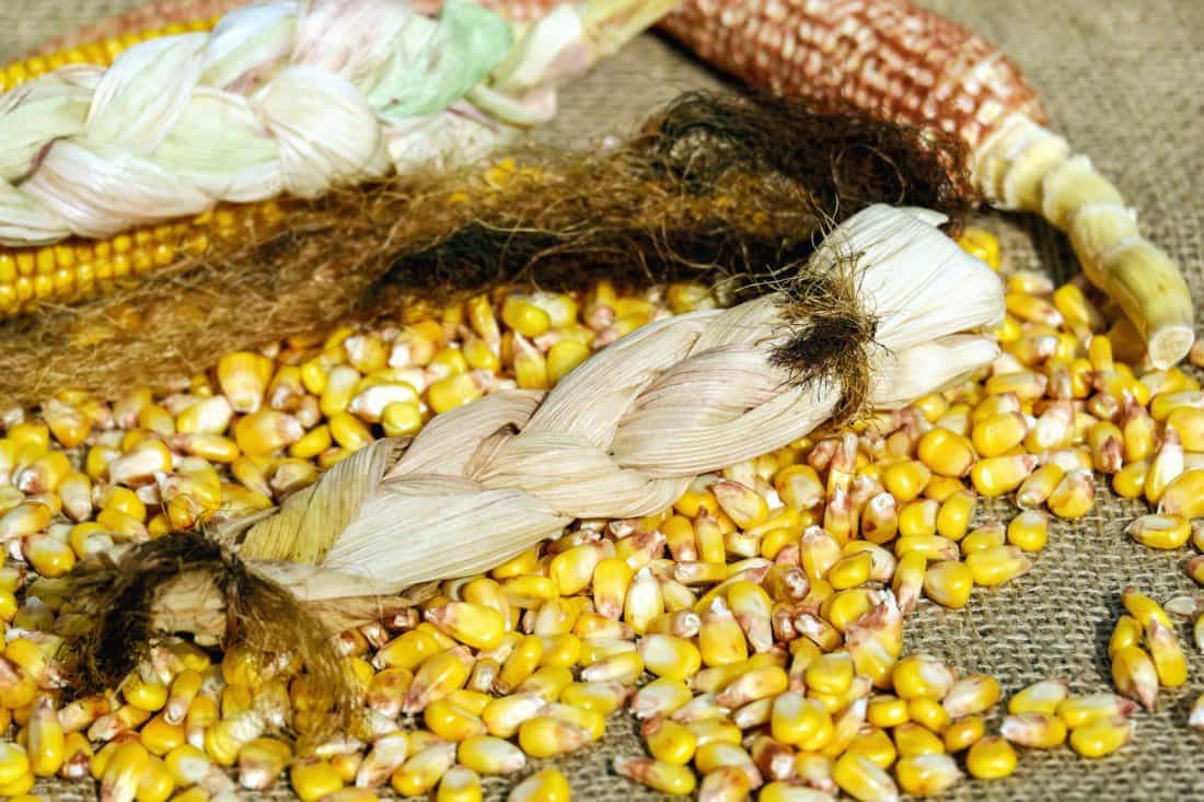 Lebensmittel, Getreide, Mais, Kernel, Getreide, Samen, Obst