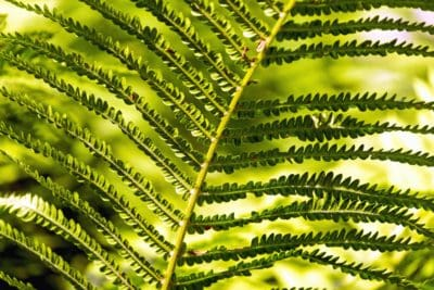 fern, shadow, green, branch, leaf, plant, garden, nature