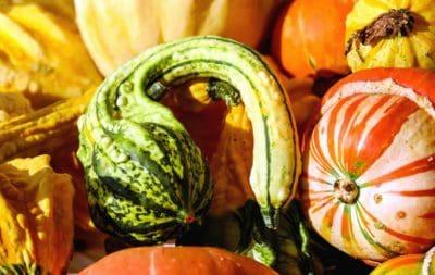 bundeve, povrća, hrane, jesen, poljoprivreda, jesen, šarene