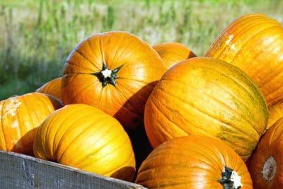 potiron, légume, l'agriculture, automne, ferme, nourriture