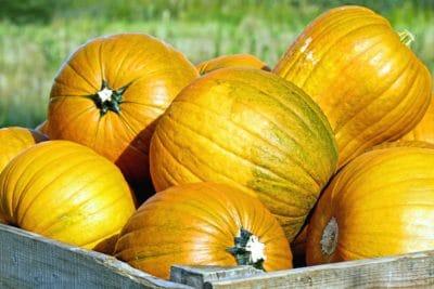 potiron, légume, automne, aliments, gourde, nature, plante