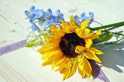 kvet, flóra, leaf, lupienok, prírody, slnečnica, letné, rastlín
