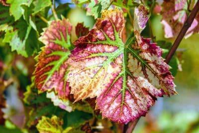 jardín, flora, naturaleza, hoja, hierba, planta, hojas, otoño