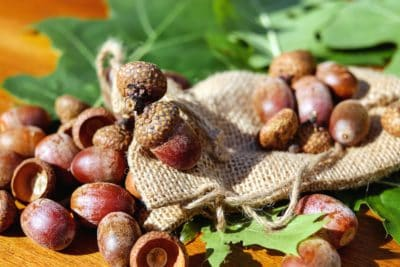 acorn, seed, table, fabric, leaf, nature, plant