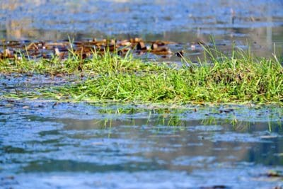 vode, jezera, močvara, prirodi, močvara, odraz, divlje