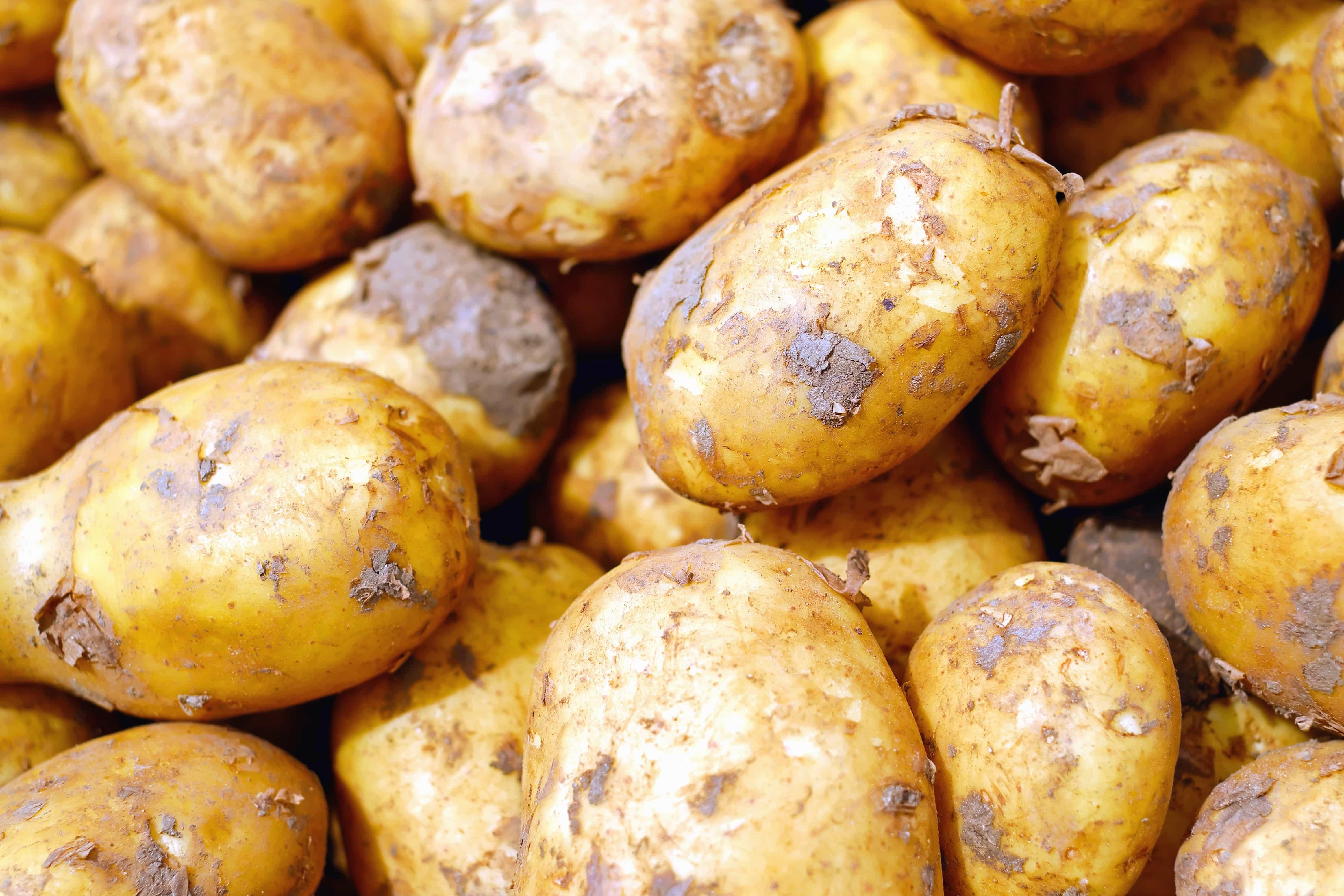 Kartoffel Bilder Kostenlos kostenlose bild kartoffel lebensmittel süßkartoffel obst gemüse