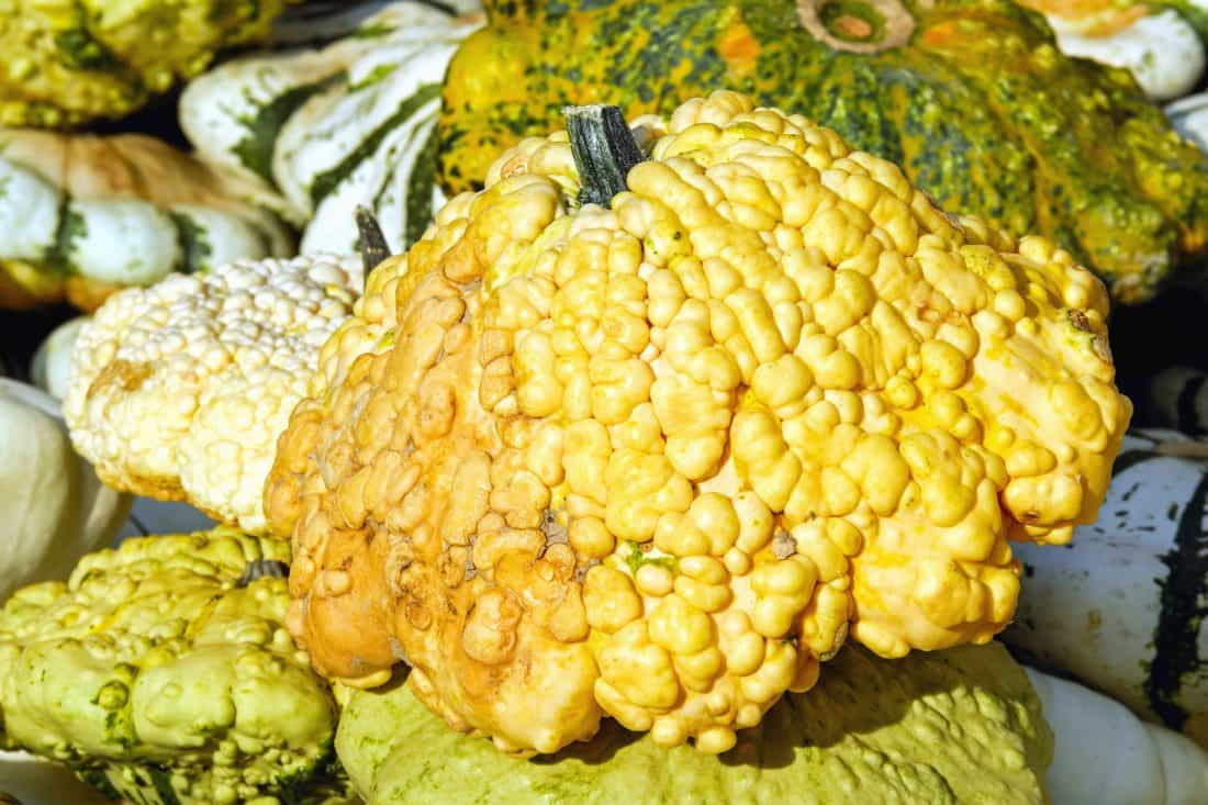 alimentaire, légumes, citrouille, organique, agroculture