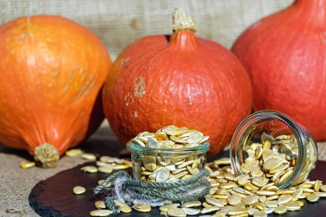 semilla, calabaza, agricultura orgánica, aún vida, nutrición vegetal, alimentos,