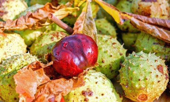 châtaignier, automne, écorce, feuilles, humides, goutte, automne, macro