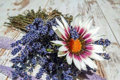 nature, flora, still life, flower, petal, plant, blossom, garden