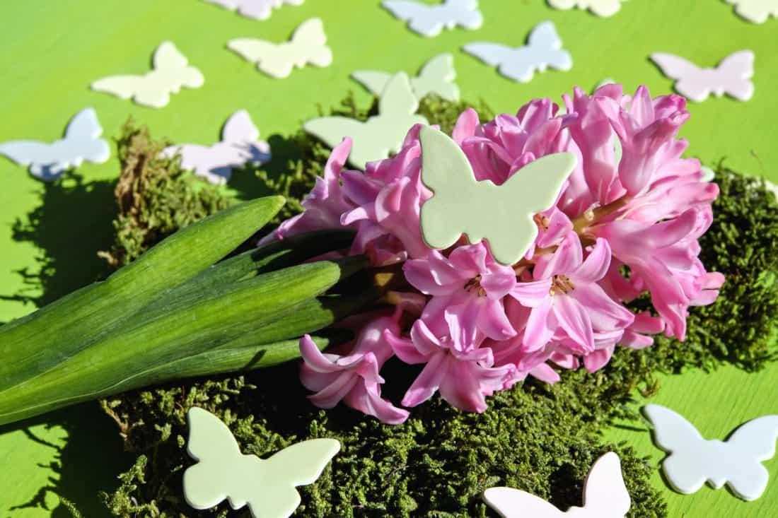 garden, flower, nature, flora, leaf, pink, plant, flower