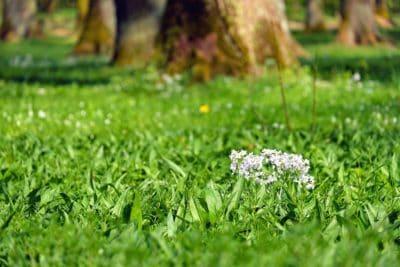 naturaleza, flor, hierba, flora, césped, jardín, hoja, verano, Prado