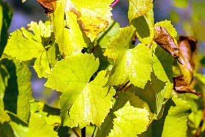 flora, natur, grønne blad, tree, anlegg, høst
