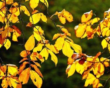 blad, natur, træ, efterår, blade, plante, skov, løv