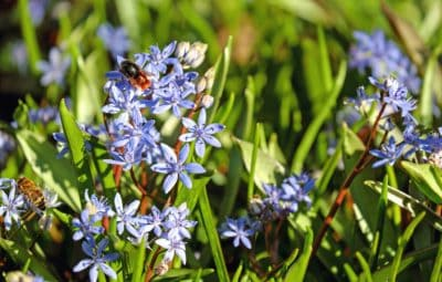 χλωρίδα, φύλλο, λουλούδι, φύση, γρασίδι, εργοστάσιο, κήπων
