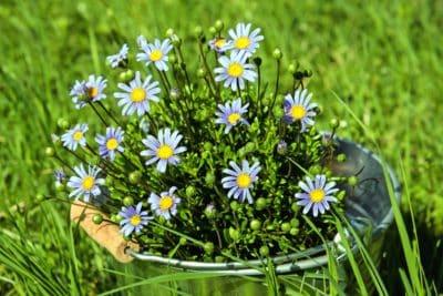 Natur, Sommer, Feld, Rasen, Pflanzen, Blume, Kraut