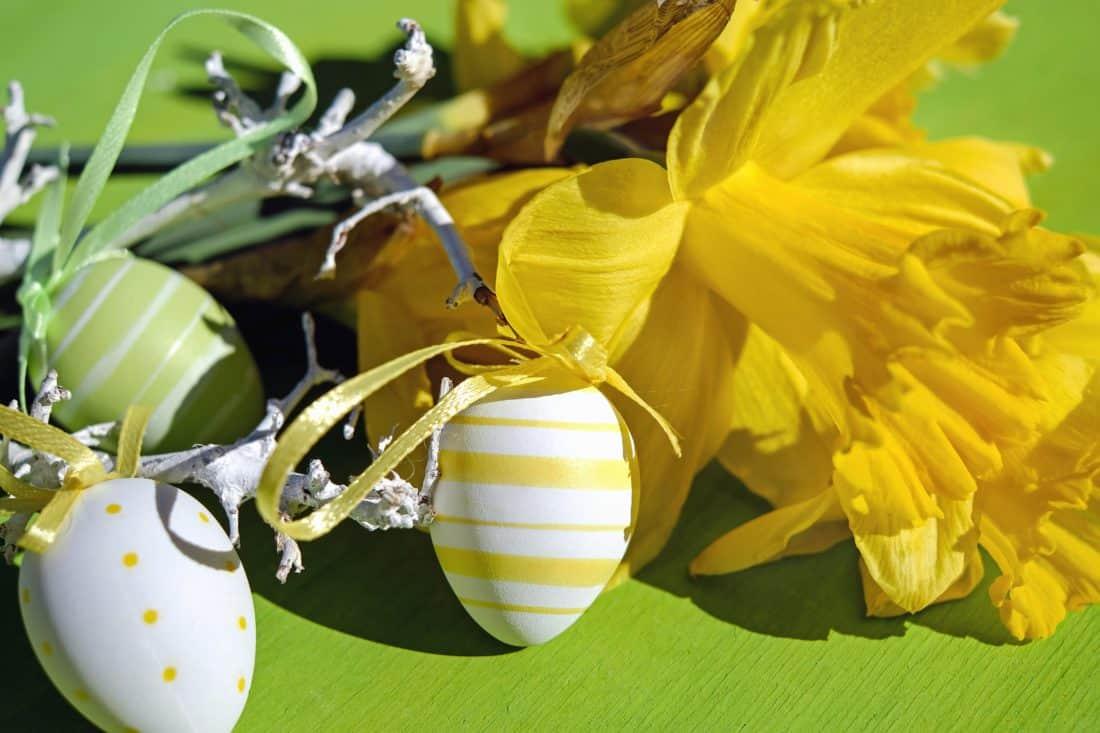 vejce, dekorace, barevné, květ, okvětní lístek, stín, Velikonoce
