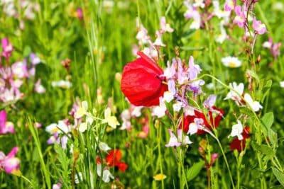 flore, nature, feuille, jardin, terrain, été, fleur, herbe
