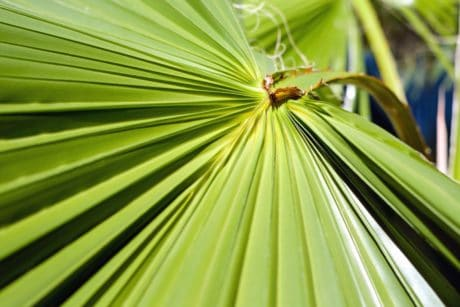 flora, nature, summer, green leaf, palm, tree, plant