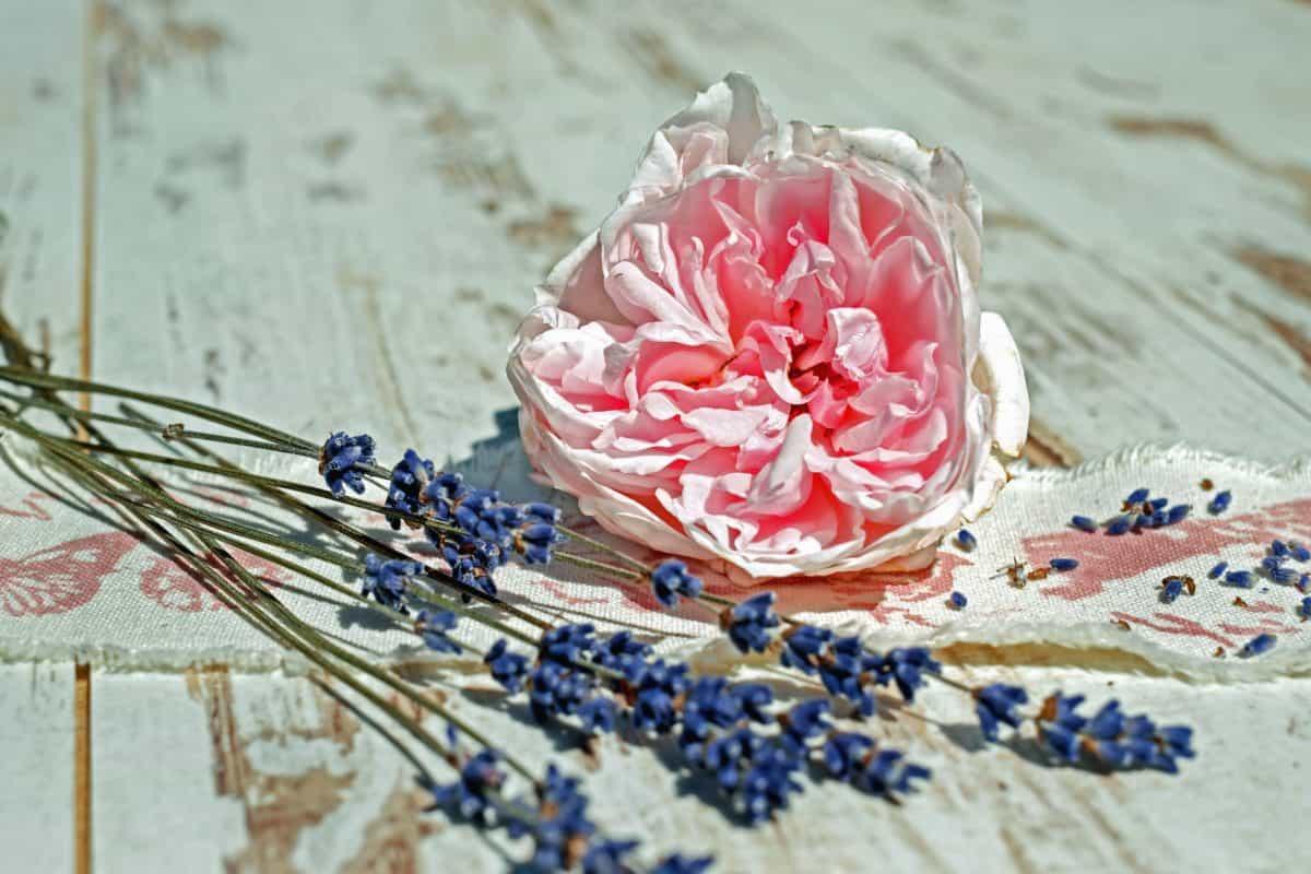 fiore, corona, rosa, natura morta, pianta, petalo, fiore