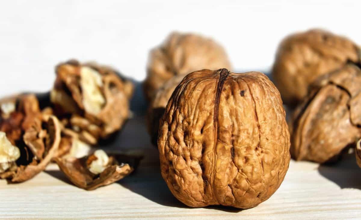 walnut, food, nutshell, nutrition, organic, protein