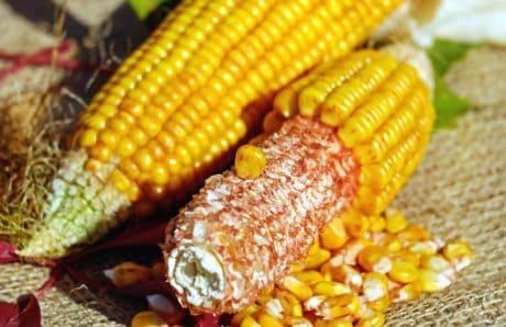 maïs, céréales, aliments, semences, noyau, nature morte