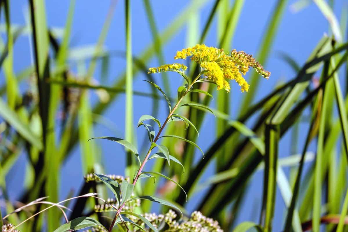 campo, flora, hierba, hoja, verano, naturaleza, flores silvestres, plantas