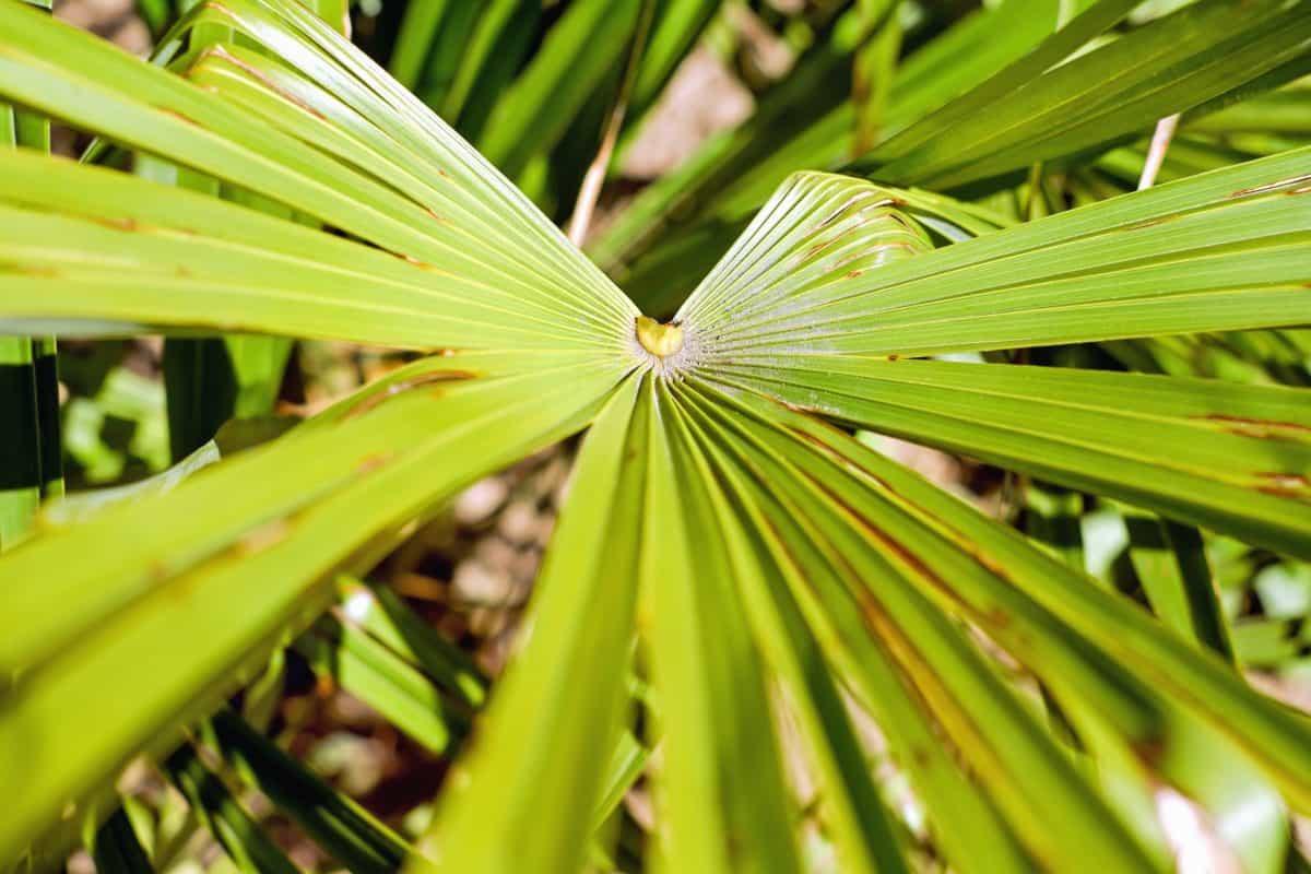 natur, sommer, flora, blade, haven, palm, plante, træ