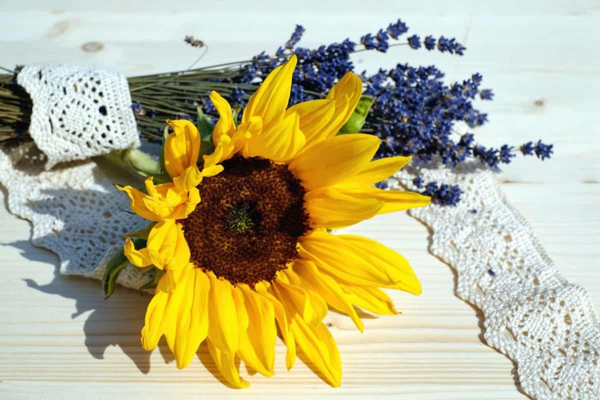 flower, nature, sunflower, still life, plant, petal, summer, table