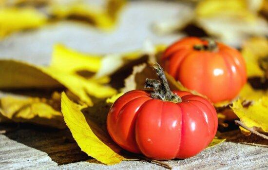 tomato, vegetable, food, organic, leaf, shadow