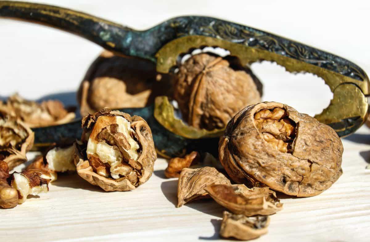 food, walnut, shell, food, grain, organic, protein, metal, tool