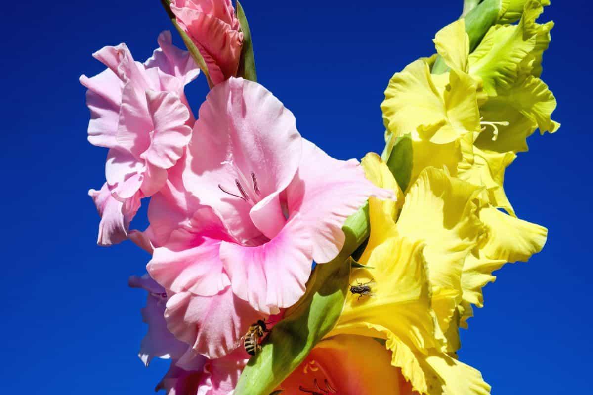 Flora, fiore, natura, sistemazione, fiore, rosa, petalo