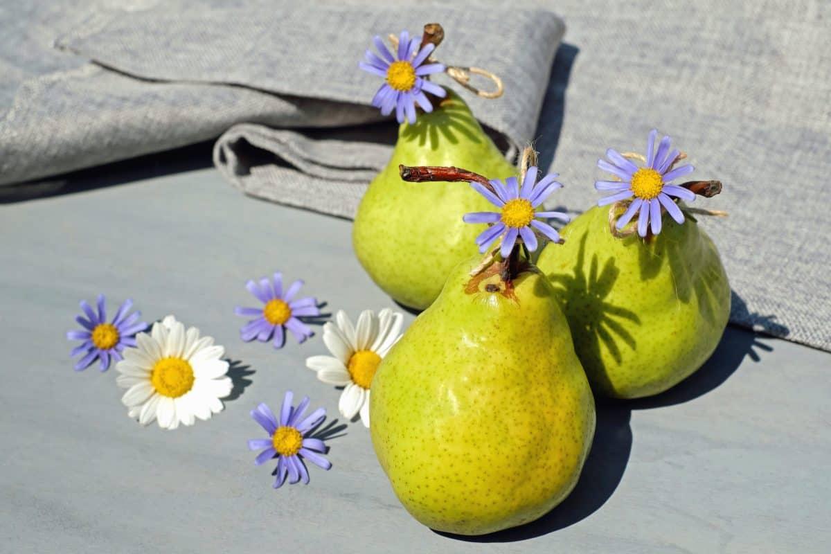 pear, fruit, food, still life, flower, petal, plant