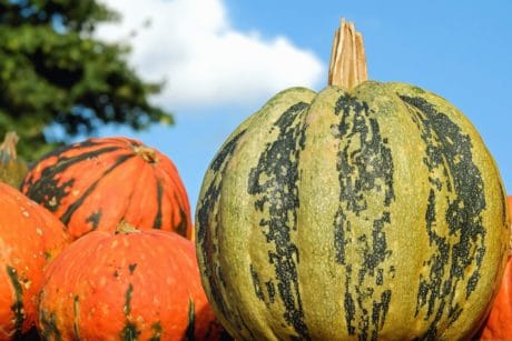 pumpkin, vegetable, autumn, food, farm, vegetable