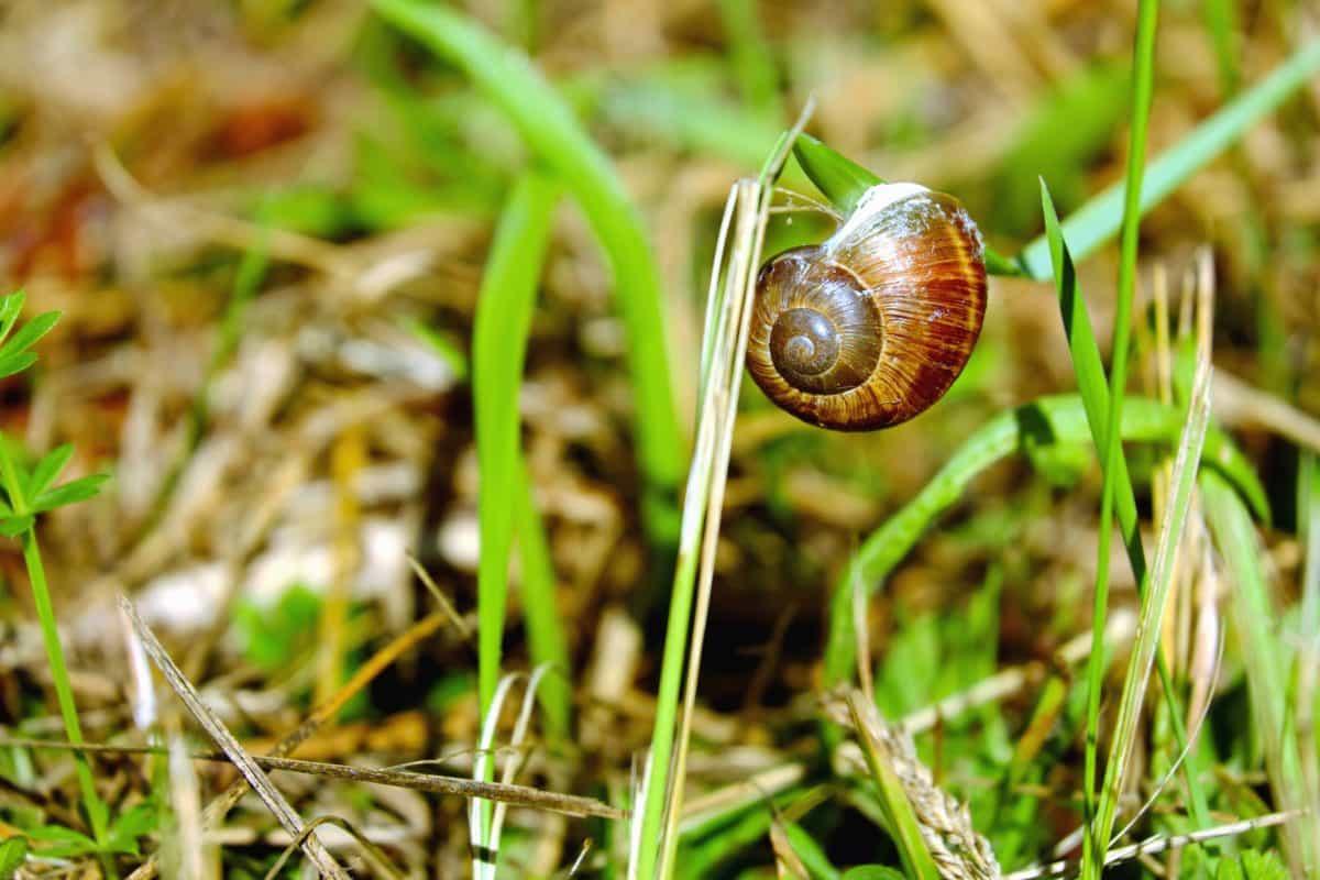 grass, leaf, nature, flora, garden, snail, mollusk
