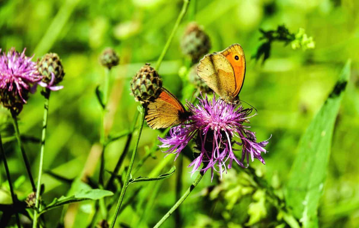 Free picture flower, butterfly, garden, summer, grass, wild