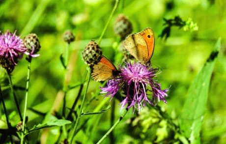flower, butterfly, garden, summer, grass, wild, insect, nature