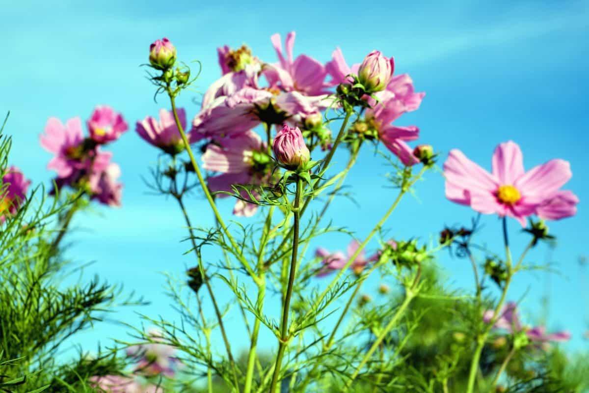 kostenlose bild feld garten natur sommer wildblumen pflanzen rasen pflanze. Black Bedroom Furniture Sets. Home Design Ideas