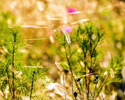 summer, rural, flower, sun, field, nature, grass, flora, herb
