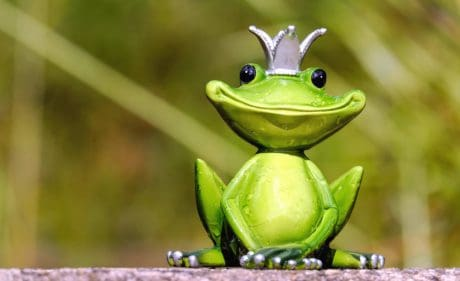 toy, figure, amphibian, nature, frog, leaf, eye, animal, green