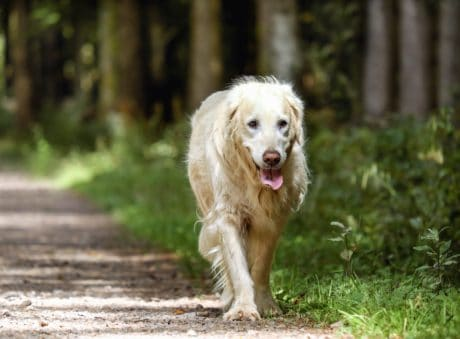 cute, canine, grass, dog, nature, pet, animal, road