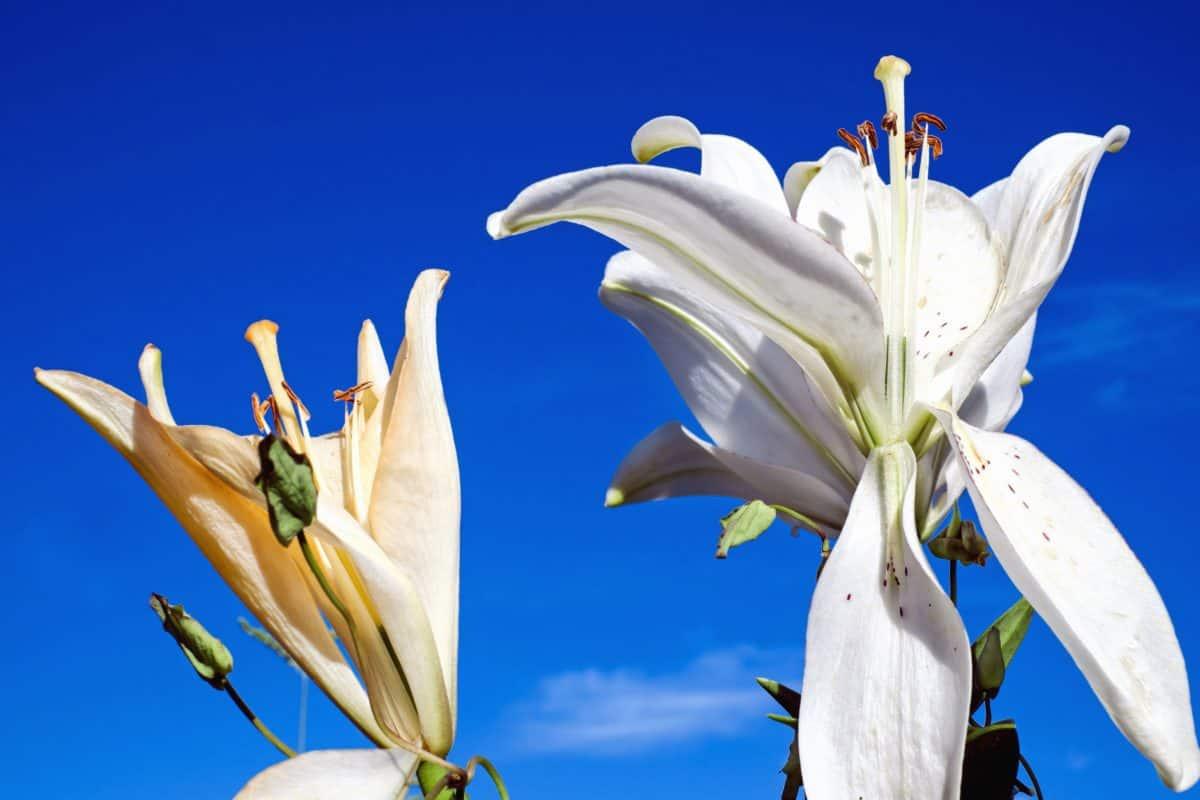 doğa, flora, yaz, yaprak, çiçek, beyaz, gökyüzü, bitki