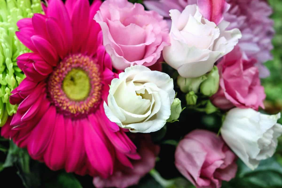 Natur, Blütenblatt, Garten, Pflanzen, Blume, Blatt, Rose, Anordnung
