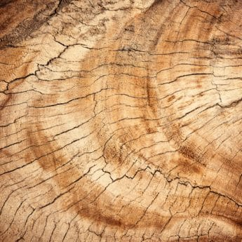wood, bark, tree, hardwood, nature, detail, macro, texture, pattern