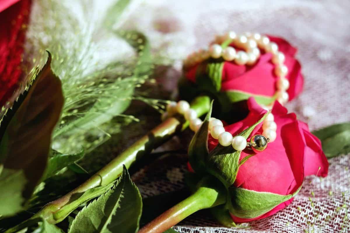 leaf, nature, flower, still life, plant, rose